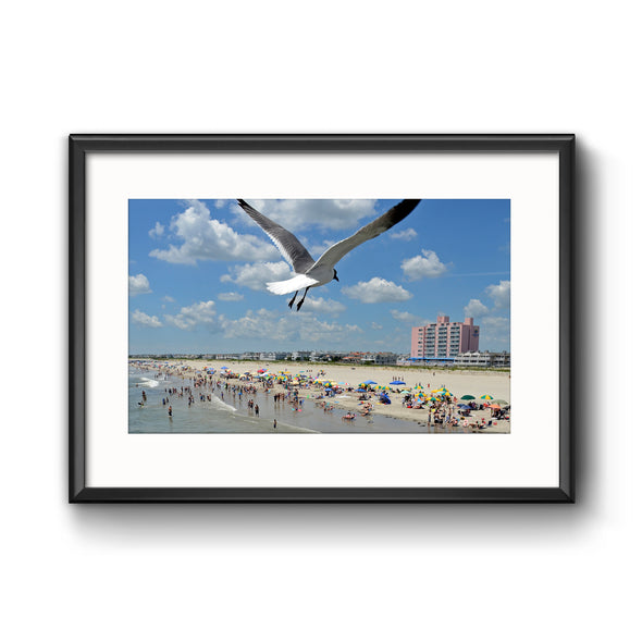 """Ocean City Swoop"" Seagull Photograph Framed with Mat by Tom Gralish"