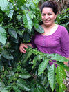 Nicaragua - Guadelupe and the Giant Peach Microlot