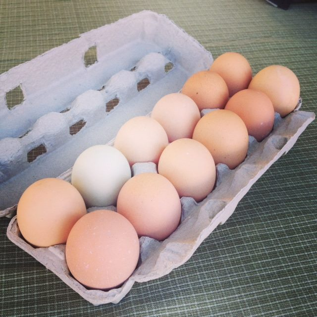 Chicken Eggs (free range)