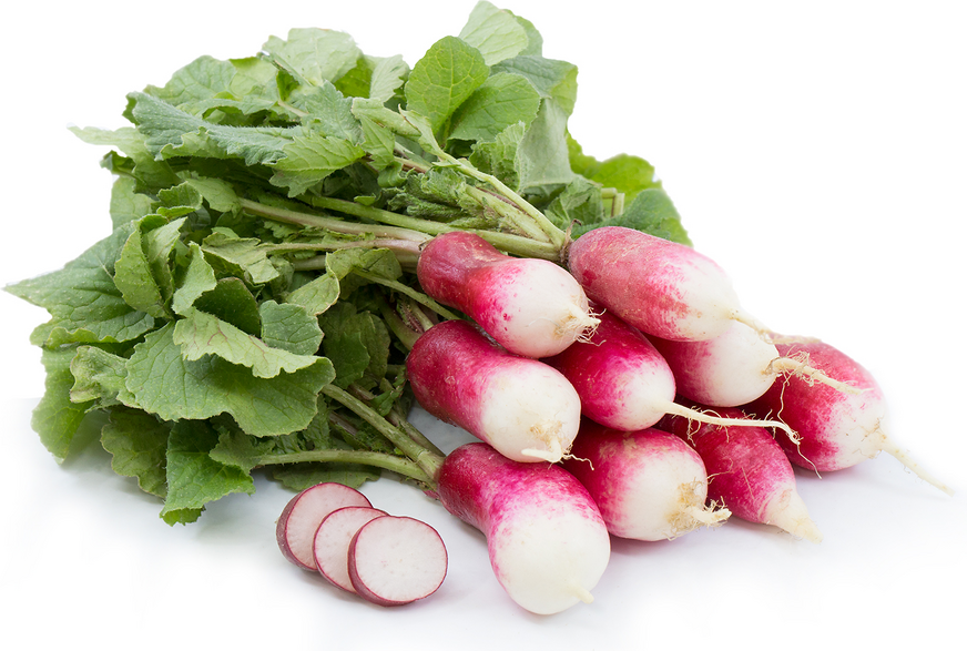 French Breakfast Radish- organic