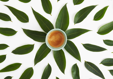 espresso coffee with green leaves sustainability