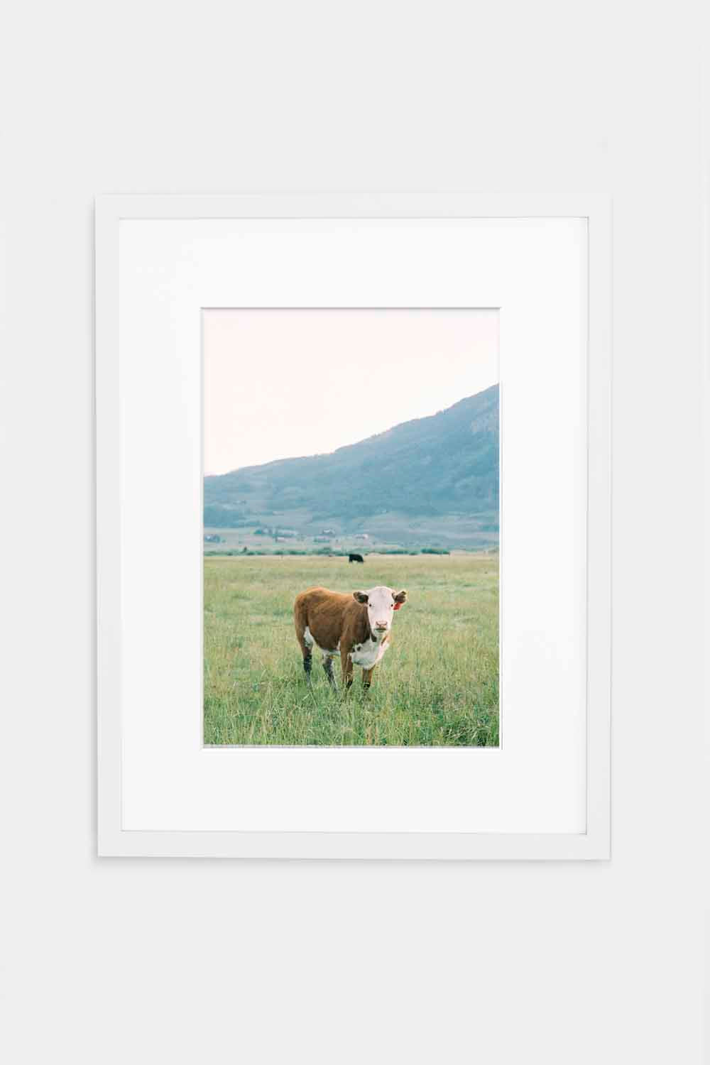 Cow in Crested Butte