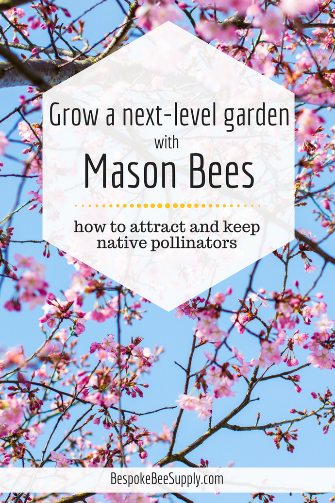 How to attract and keep mason bees: Support native pollinators