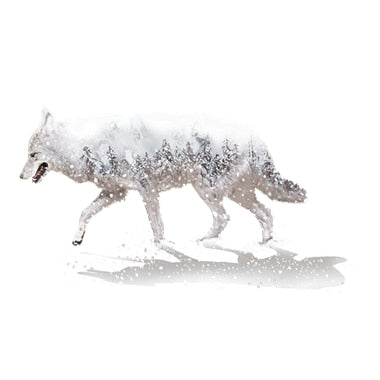 [Shijuehezi] Wolf Wall Stickers Pvc Material Self Adhesive Diy Wild Animal Wall Art For Kids Rooms Kindergarten Glass Decoration