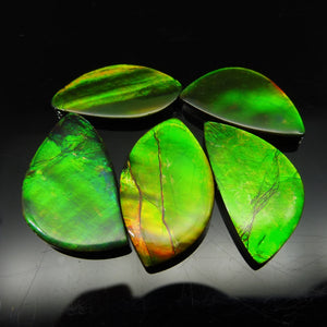 Ammolite 61.52 cts 5 stones Wholesale Lot