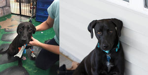 16 Amazing Photos Of Dogs Before And After Their Rescue