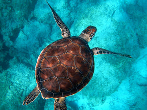 World Turtle Day: What Are The Threats and What Can You Do To Help? - by Hannah Rudd