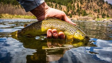 3 Tips For Fall Streamer Fishing