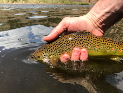 4 Tips to Finding Great Fishing During Runoff