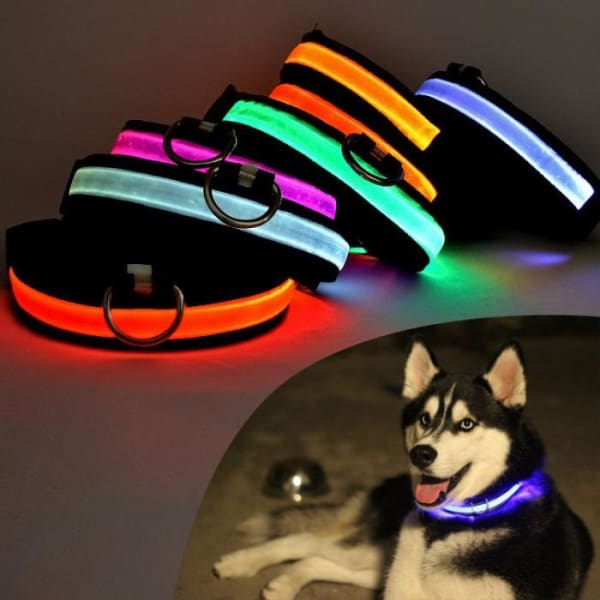 $22.00 - GLOW IN THE DARK DOG COLLAR - NIGHT SAFETY SOLAR CHARGE LED (1) TRAVEL PETS