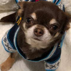 NEW Size 3 Hand Embroidered Peruvian Dog Jumper Navy and Turquoise 25cm Chihuahua Clothes and Accessories at My Chi and Me