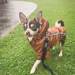 Urban Pup Chihuahua Puppy Chihuahua or Small Dog Coat Bronze Rainstorm Jacket