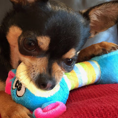 Chihuahua Small Dog Toy with Squeaker Moo Blue Chihuahua Clothes and Accessories at My Chi and Me