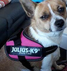 Julius K9 IDC Powerharness for Puppies and Chihuahuas Dark Pink Chihuahua Clothes and Accessories at My Chi and Me