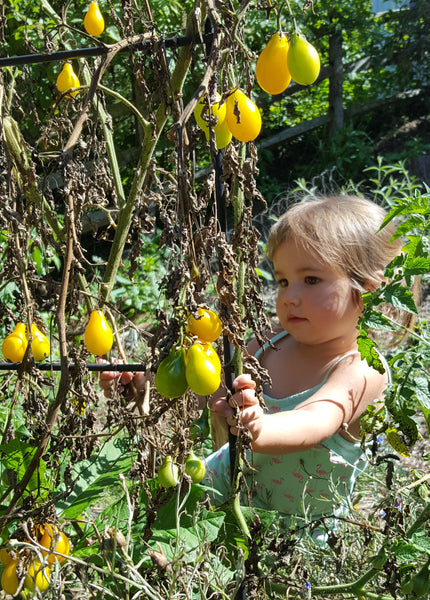 Math lessons in the garden with kids: Germination tests