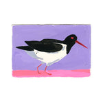 American Oyster Catcher, Painting on Paper