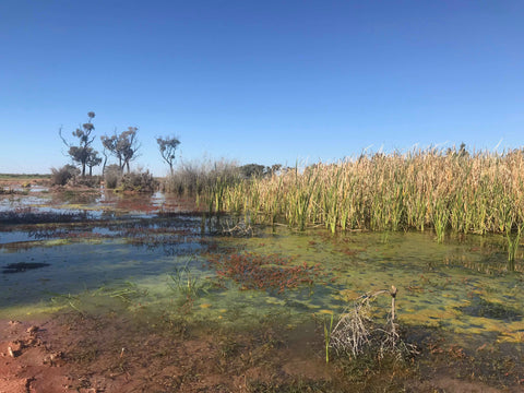 flood water pond australia outback beautiful blog art Christine Onward