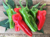 "PLANT: Peperone Friariello (Italian Frying Pepper) 4"" pot - Local only - no shipping"