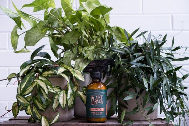 Neem Oil - Organic Leaf Shine & Pest Repellent