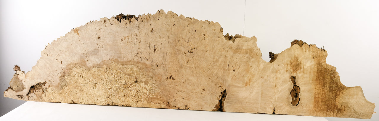 Big Leaf Maple Burl MB-31