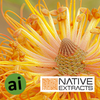Banksia Flower Extract - Aromatic Ingredients