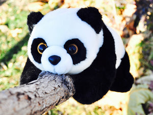 10+ Amazing Facts you should know about Giant Pandas, Part 3