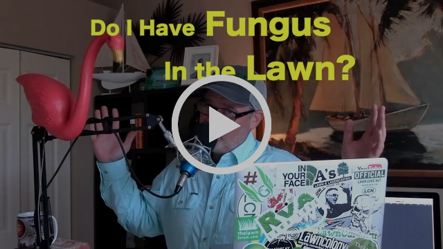 How Much Nitrogen To Put On Your Lawn This Summer The
