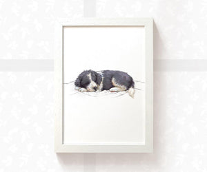 Sleeping Border Collie Dog Painting