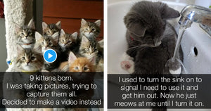10 Hilarious Reddit Cat Posts That Are Guaranteed To Make You Smile