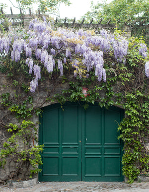 Purple Wisteria in Montmartre - Every Day Paris