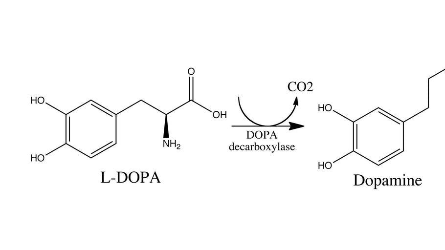 L-Dopa Proves To Be An Answer To Human Toxicity