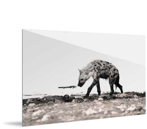 Hyena with Feather by Alexandra Diemand