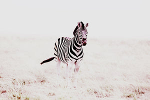 Stripes by Alexandra Diemand