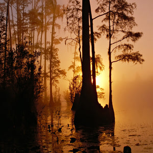 Okefenokee swamp georgia florida