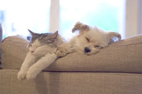 cute cat and puppy sleeping on sofa cushions
