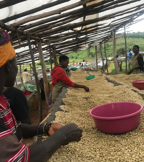 Coffee That Matters: The global impact of an ethical roastery