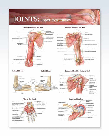 Joints: Upper Extremities anatomy poster