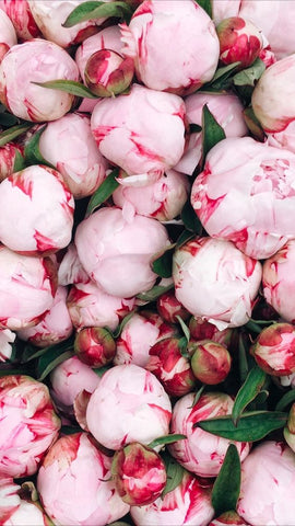 Peonies wellington florist delivery