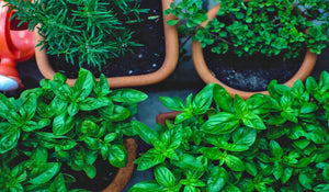 Season Food With Fresh Herbs from Your Kitchen Herb Garden