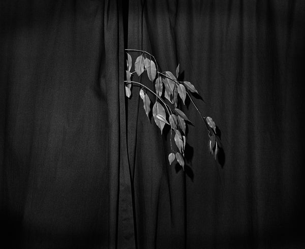 The Plant, Josef Kovac