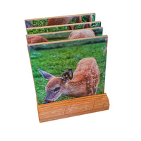 Michigan Coasters Wildlife Doe deer and fawn four piece coaster set with base