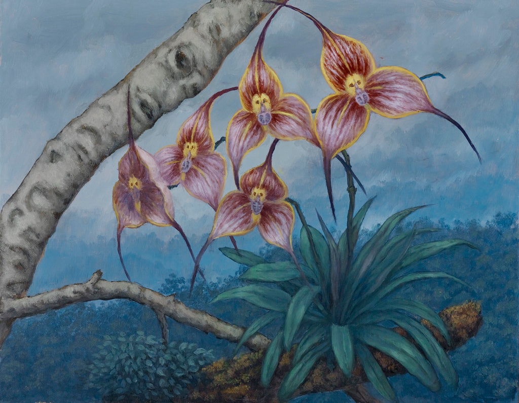 Sandra Yagi - Monkey Faced Orchids