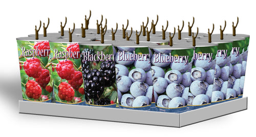 Assorted Berries in Plastic Containers Unit #15004