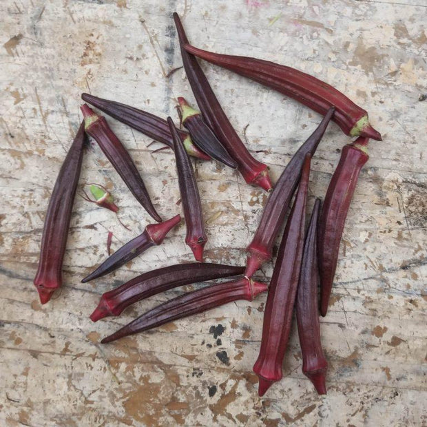 Okra seeds- Red Burgundy, High yielding 4' plant that produces slendery burgundy pods.