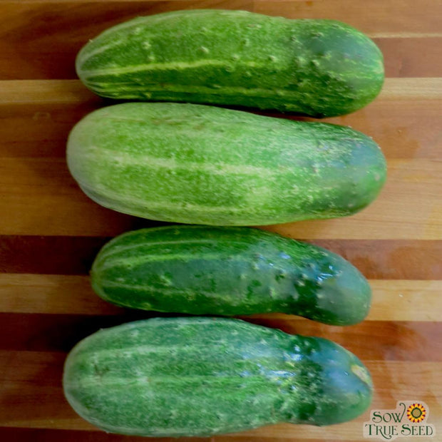 Cucumber - Bush Pickle - Sow True Seed