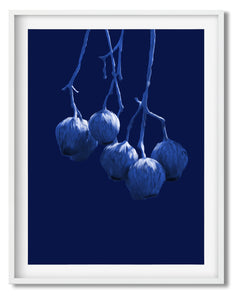 Wall Art -  Twilight Honkey Nuts - Framed / unframed art print (A-786)
