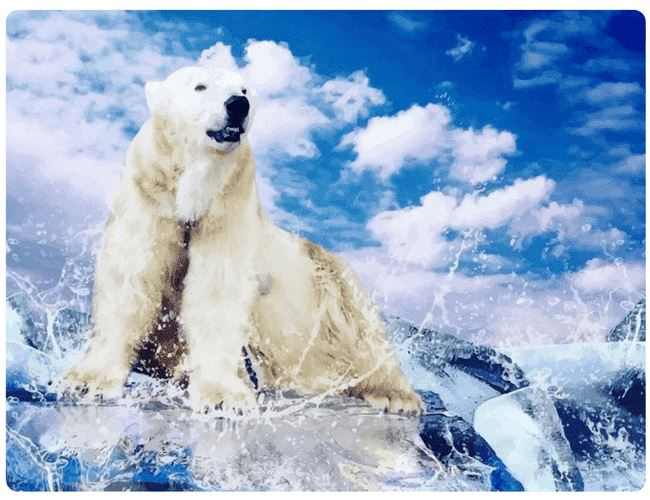 A Powerful Polar Bear - LOVIELO