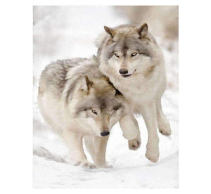 Splendid Wolves in Winter - LOVIELO