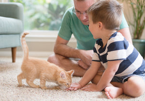 How To Socialize Your New Pet Kitten