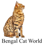 Bengal Cat World